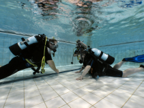 Become a PADI Open Water Diver.
